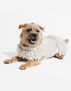 74 Best Knitted Dog Sweater Patterns Images Dog Clothing Dog