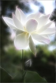 According to Buddhist principles, the heart of a person who has not attained enlightenment is the embodiement of a lotus that has not blossomed yet. Once enlightenment has been reached their heart becomes a lotus in bloom. This is why depictions of Buddha often show him seated upon an open lotus flower.
