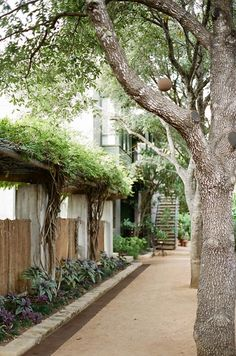 staying in austin: hotel san jose - a house in the hills - interiors, style, food, and dogs