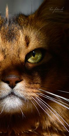 In a cats eye, all things belong to a cat. --British Proverb