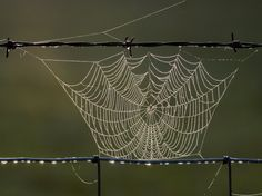 Spider web between the wires