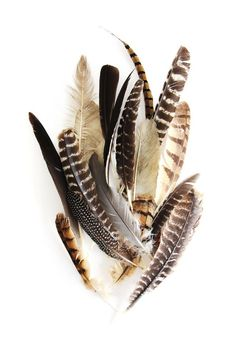 """thestylishgypsy: """"Feathers by Mary Jo Hoffman """""""
