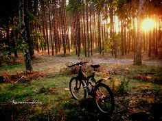 w zaczarowanym lesie