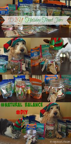My GBGV Life | Easy #DIY Holiday Treat Jars for dogs and cats filled with healthy #NaturalBalance @naturalbalance treats #sponsored