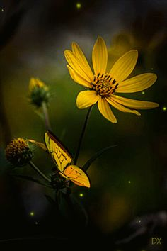 Flower Wallpaper, Screen Wallpaper, Butterfly Video, Beautiful Flowers Wallpapers, Gif Photo, Fall Pictures, Flower Images, Beautiful World, Nature