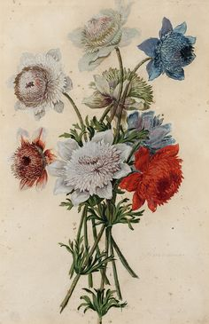 French School, 18th c, after Nicolas Robert (1614-1685), bouquets, Anemonum fasciculus, watercolour and gouache on paper