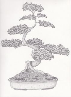 Tree Outline, Tattoo Outline, Outline Drawings, Podocarpus Bonsai, Bonsai Tree Tattoos, Japanese Bonsai Tree, Bonsai Styles, Tree Sketches, Tree Silhouette