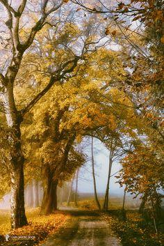 The Road to You by Lars van de Goor on 500px.com
