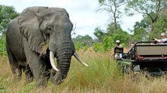 Images of Nottens Bush Camp - Sabi Sand Game Reserve - South African Safari Lodge Safari Online, South Africa Holidays, Sand Game, Safari Holidays, Kruger National Park, Game Reserve, African Safari, Africa Travel, Habitats