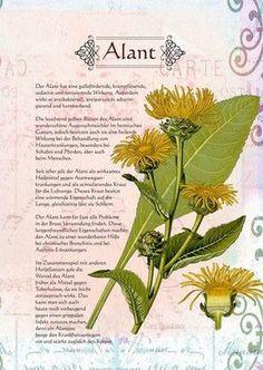 Alant - Alantwurzel gegen böse Geister. Als Dank für die wiederkehrenden Kräfte der Natur kann sie bei der Räucherung eingesetzt werden.
