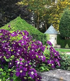 Clematis Garden Paths, 20 Years, Newport, Stepping Stones, Garden Design, Bloom, Outdoor Decor, Plants, Colors