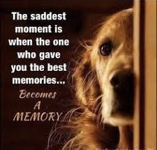 Golden Retriever Discover scruff The saddest moment is when the one who gave you the best memories.Becomes A MEMORY I Love Dogs, Puppy Love, Animals And Pets, Cute Animals, Baby Animals, Wild Animals, Pet Sitter, Pet Loss Grief, Loss Of Dog