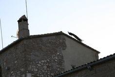 Com el gall d'Alfanhuí: fent un tomb per la teulada. | laiadebs