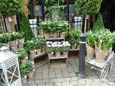 Flower shop in Harrogate...only sells white flowers. I love the front display, it looks very clean and sleek but only selling white flowers makes it a bit limited?