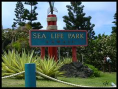 Sea Life Park.  This was my favorite place to go as a child. I loved feeding the seals & the turtles & touching the sting rays in the shark tank when no one was looking. Loved the penguin & dolphin shows. Just a great place to see as a kid. :)