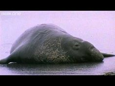 Funny Talking Animals - Walk On The Wild Side - Series 2, Episode 3 Preview - BBC One http://pinterest.com/shorty8392/