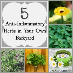 5 Anti-Inflammatory Herbs in Your Own Backyard | One of the reasons I love herbs so much is because of their ability to take care of every d...