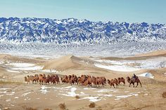 Mongolian (Gobi) desert. Really awesome shot of snow and camels.