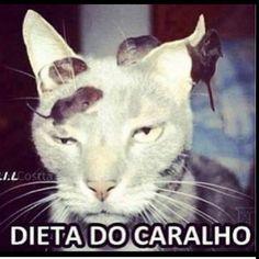 Chatiada !!!  . . . #dietasdadepressao #dieta #dietaja #regime #treino #teamgordo #odeiodieta #personal #academia #fikagrandeporra #fit #fome #fitness #gordo #gordices #humor #jacar #lowcarb #lifestyle #frangocombatatadoce #chocolate #choragorda #fibrado #nutri #nutricao #nutricionista #boanoite #junkfood #teamtreta by dietasdadepressao