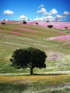 Alentejo, Portugal. Re-pinned by #Europass