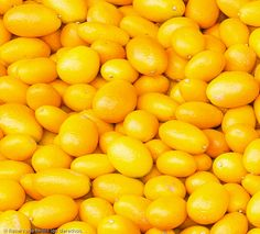 """When life gives you lemons suck out all of the vitamin C and yell """"EAT THAT, LIFE!"""""""