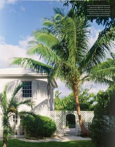 refined white island home and gorgeous palms