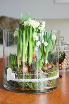 Houseplants That Filter the Air We Breathe Spring Bulbs. Paperwhite Flowers, Magazine Deco, Spring Bulbs, Christmas Flowers, Christmas Bulbs, Deco Floral, Bulb Flowers, Water Plants, Spring Flowers