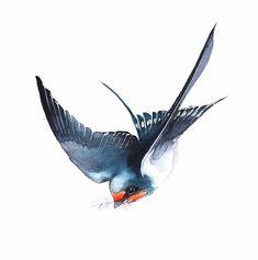 Barn Swallow Tattoo, Swallow Bird Tattoos, Watercolor Bird, Watercolor Illustration, Watercolor Paintings, Bird Drawings, Animal Drawings, Princess Mural, Mum Tattoo
