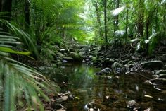 The World Heritage listed Rainforest, in Tropical North Queensland. Rainforest Animals, Amazon Rainforest, Tasmania, Gaia, Places To Travel, Places To See, Beautiful World, Beautiful Places, Charms