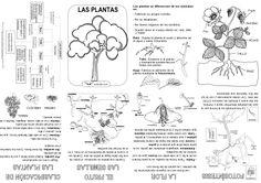 Mini libro de las plantas - Actiludis