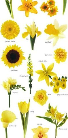 Trying to find yellow flowers that are seasonal for fall........  Wedding flowers yellow