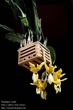 caring for orchids after flowering Home Garden Plants, Garden Pots, House Plants, Orchid Show, Orchid Care, Amazing Gardens, Beautiful Gardens, Arrangements Ikebana, Mini Orquideas