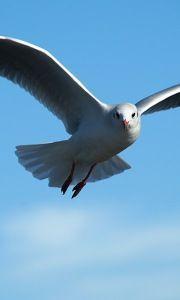 Excelente Costo Free Aves Volando De Frente Ideas Aves