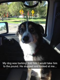 Dog Meme #Barking, #Pound
