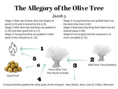 The longest allegory in scripture is Zenos' allegory of the olive, which is found in Jacob 5. In Jacob 5:3, Zenos explains to his hearers that the tame olive tree represents the house of Isra…