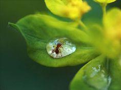 beautiful photography - Pesquisa Google