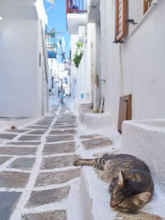 The sleeping cat in the alley of Mykonos Town,Greece :