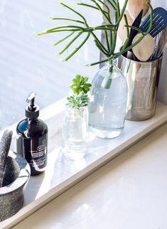 succulents in glass jars