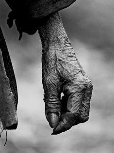 By Memy. La mano piuttosto v ssuta di un vecchio cacciatore di teste ultranovantenne che ci ha raccontato di aver cacciato 8/9 teste! I Konyak-Naga sono una tribù relativamente conosciuta che vive ne distretto di Mon nel Nagaland che si trova nell' estremità nord orientale dell' India al confine con il Myanmar. Come le altre tribù che vivono nella regione, anche i Konyak-Naga avevano l' usanza di tagliare le teste ai nemici e si dice che l' ultima testa sia caduta agli inzi degli anno 80!