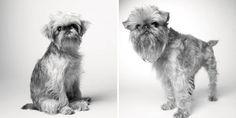 Dog Years: Faithful Friends Then & Now Photography Book by Amanda Jones - Dog Milk Amanda Jones, Dog Photos, Dog Pictures, Side Portrait, Dog Milk, Dog Years, Old Dogs, Dog Show, Photography Projects