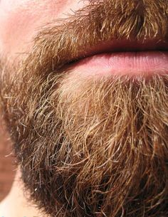 """""""There is always a period when a man with a beard shaves it off. He returns headlong to his beard. Moustaches, Hairy Men, Bearded Men, Hot Beards, Ginger Beard, Epic Beard, Beard No Mustache, Hairy Chest, Men's Grooming"""