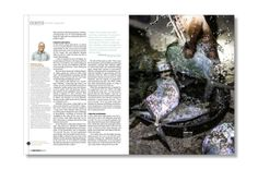 World Wildlife, print. Pentagram.