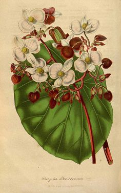 Medical Illustration Vintage Botanical Prints Ideas For 2019 Nature Illustration, Medical Illustration, Botanical Illustration, Vintage Botanical Prints, Botanical Drawings, Vintage Prints, Botanical Flowers, Botanical Art, Illustrations Médicales