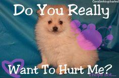 Stop Animal Abuse | Stop Animal Abuse