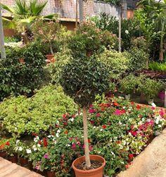 Garden Centre, Plants, Fotografia, Plant, Planets