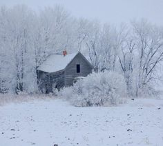 Hoar frost and abandoned building - along U.S. Highway 14 near Waseca MN