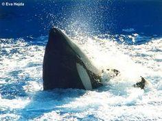 Blog de angelfive - Page 43 - Pour l'amour des orques - Skyrock.com