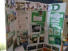 Our Ireland board for Thinking Day (60922)