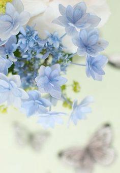 Forget Me Not - Anchusa 'Blue Angel' ~ VoyageVisuelle ✿⊱╮