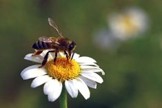 As you plan your 2021 garden, pick plants that support bees, butterflies and ladybugs Garden Insects, Garden Pests, Insect Species, Bee On Flower, Flower Garden Design, Beneficial Insects, Spring Garden, Lawn And Garden, Landscaping Company